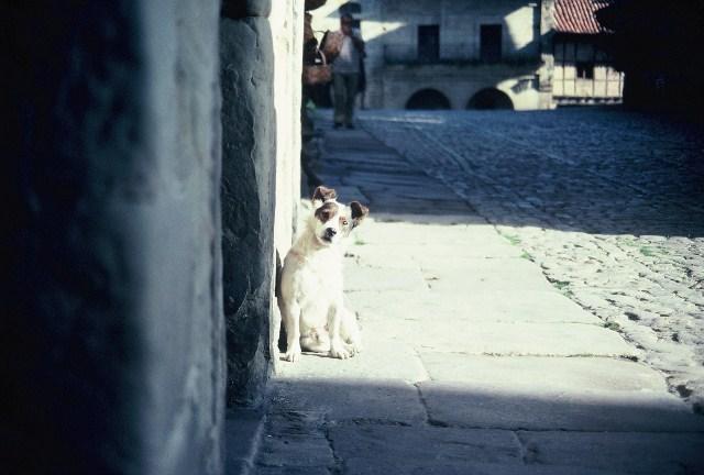 perro-y-calle-empedrada-tomada-por-laura-bodin-bodin06-r2-e031